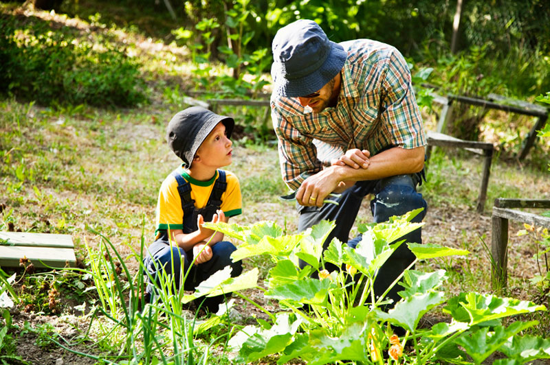 Green waste removals Brisbane - gardening